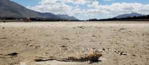 Theewaterskloof dam drought