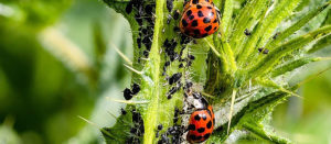 How to keep pests out of your crops