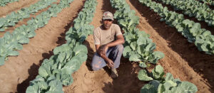 From subsistence to a smallholder farming
