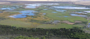 Wetlands project at tip of Africa shows the way to ecological recovery