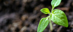 To restore our soils, feed themicrobes
