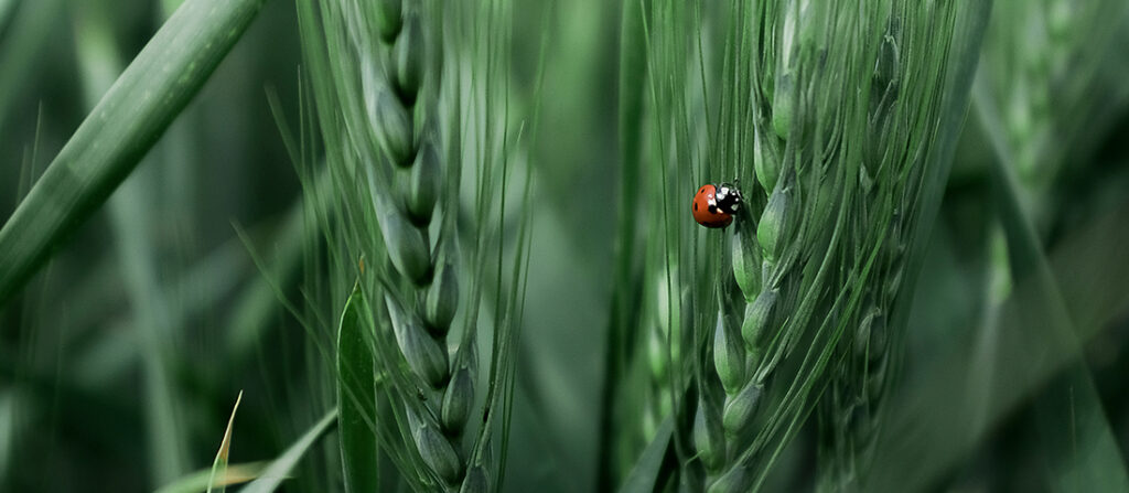 The importance of crop health to sustainable crop production